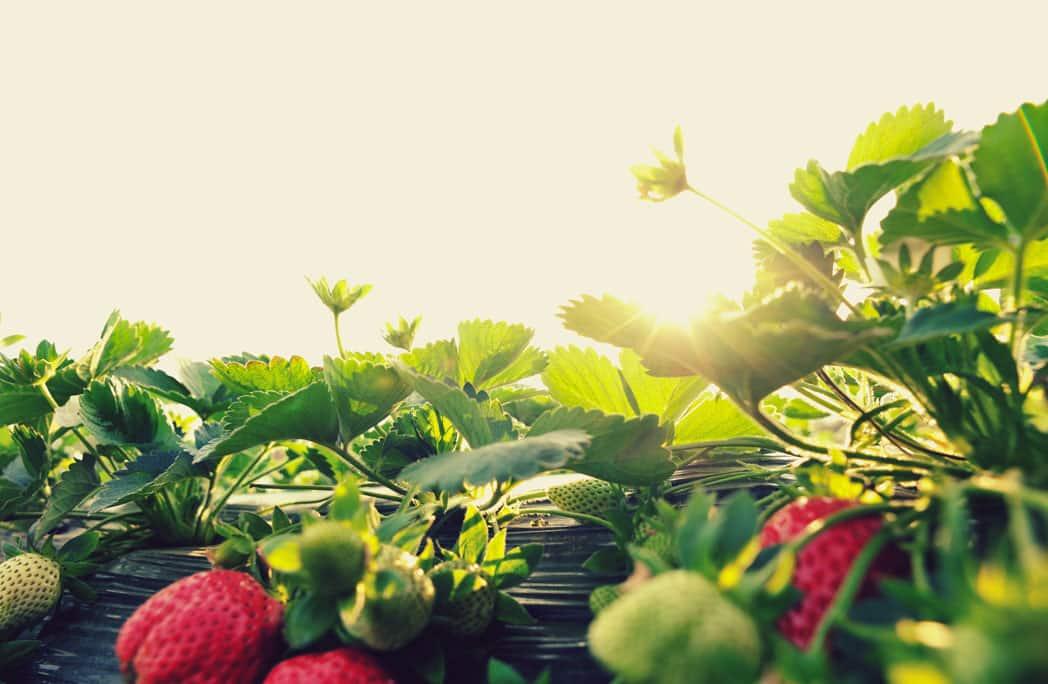 Pourquoi rejoindre un jardin partagé ?