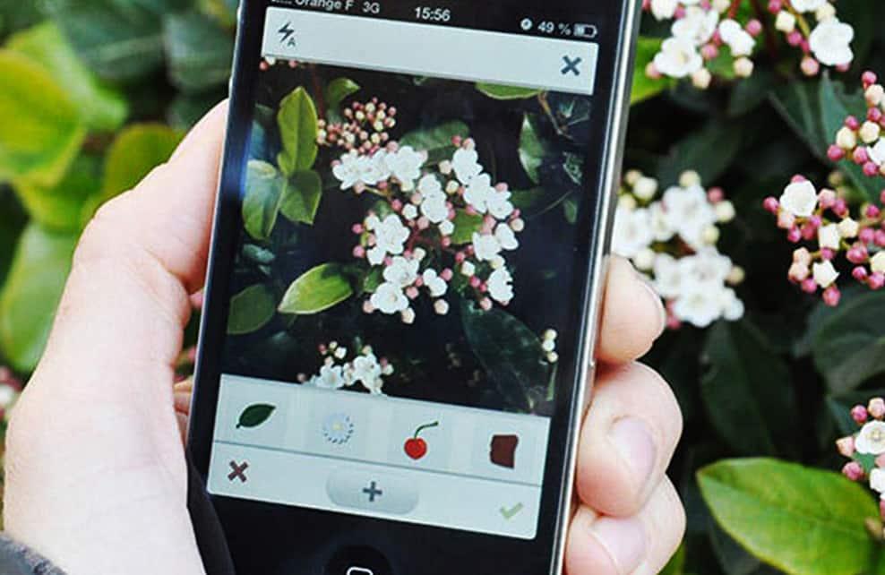 https://www.femmesdetunisie.com/apres-shazam-pour-identifier-les-photos-plntnet-vous-aidera-a-identifier-les-plantes/