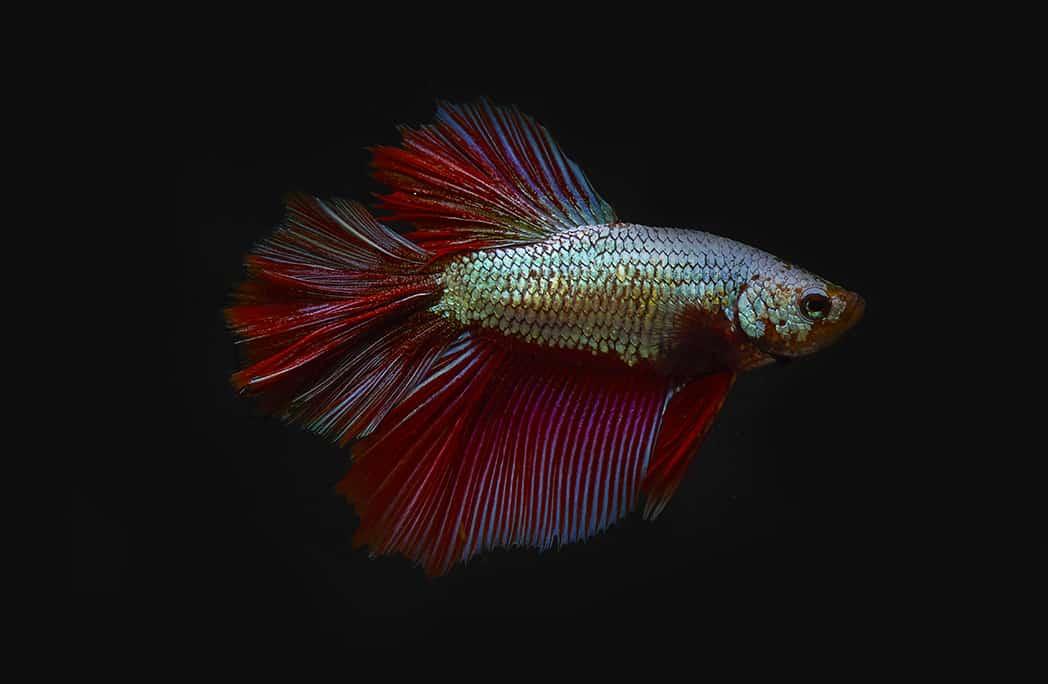 8 idées de poissons pour nos intérieurs