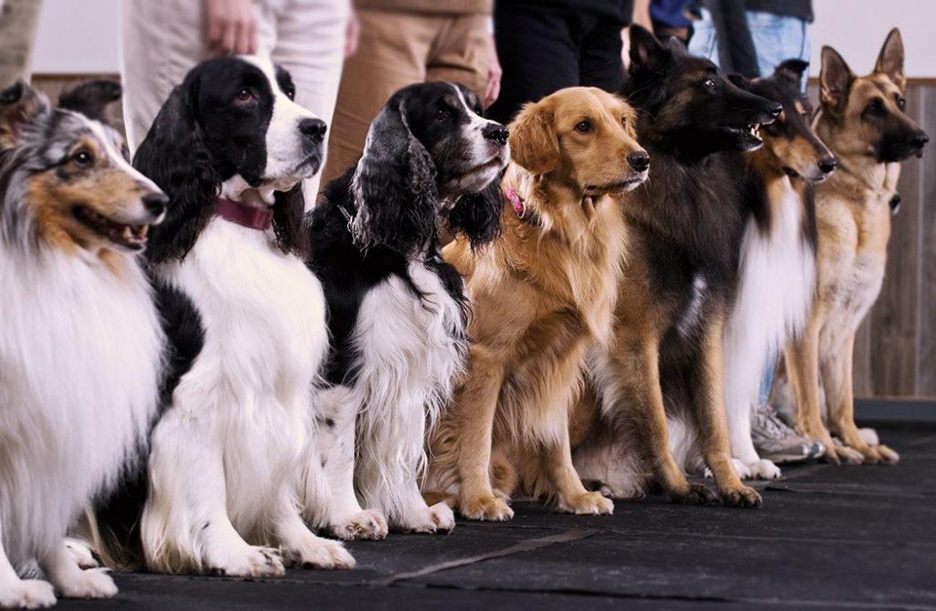 Jeu-concours : « Mon chien prend la pose »