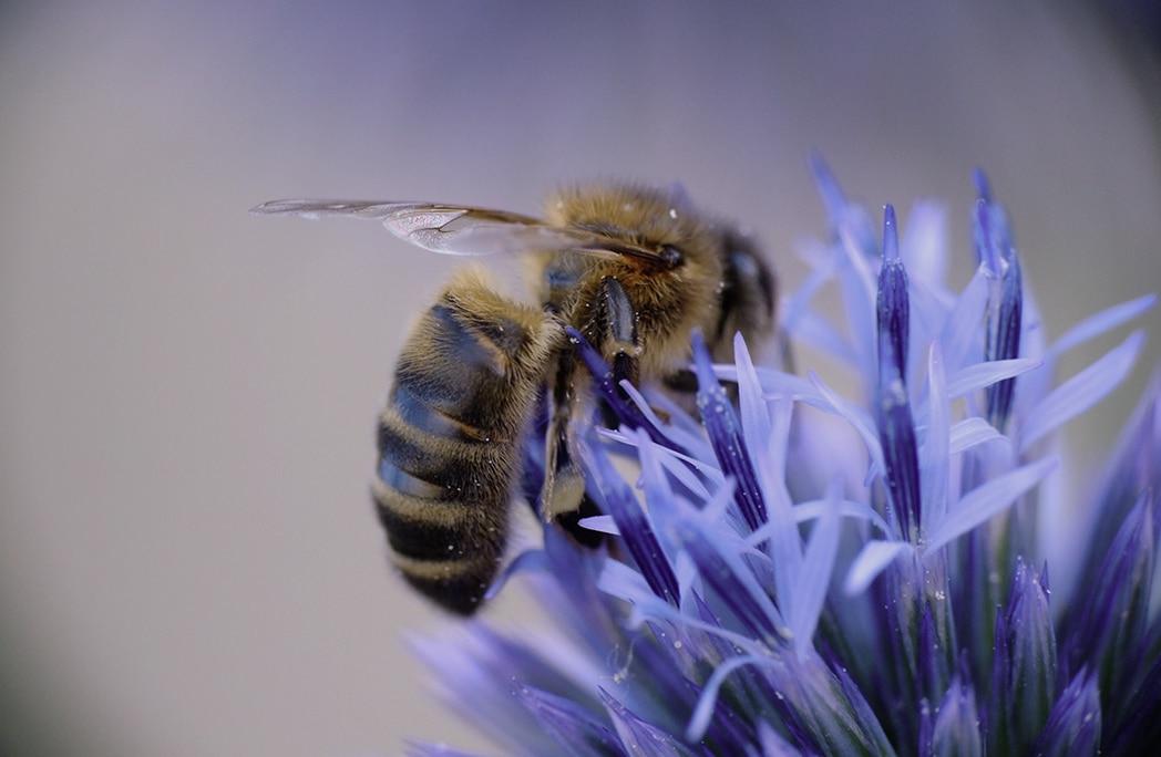 Vite, sauvons les abeilles !
