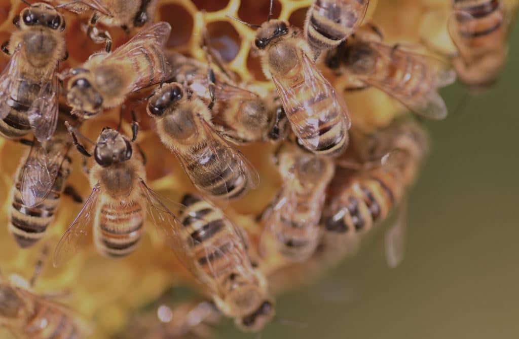 Royal ! Découvrez la danse surprenante des abeilles
