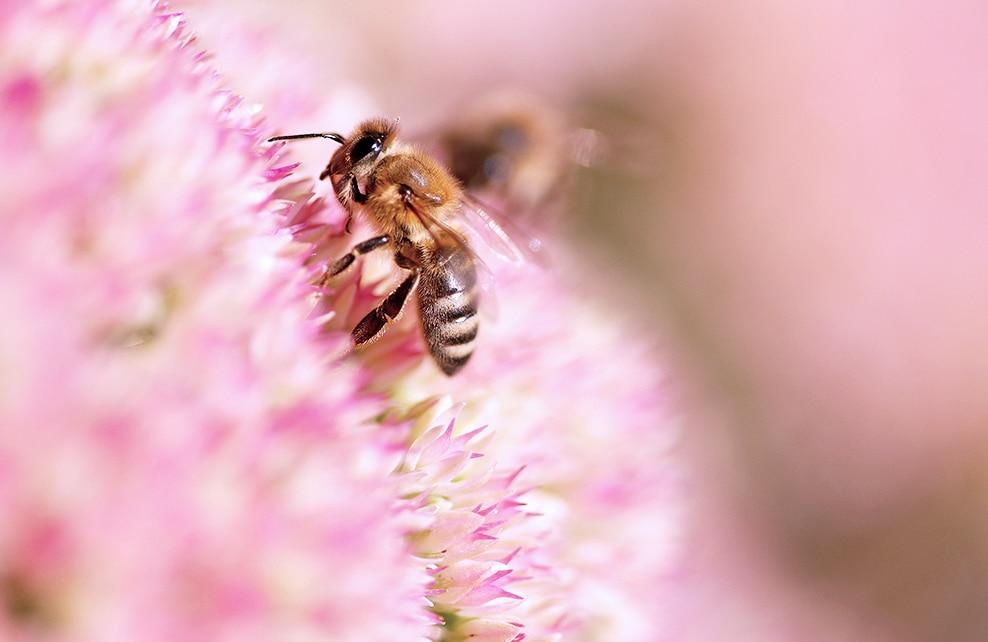 abeilles 3