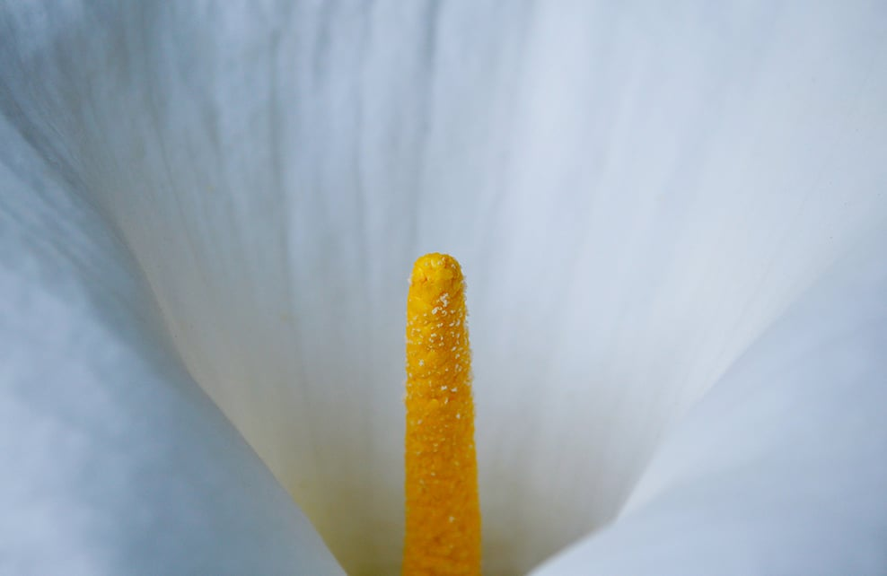 pollen3
