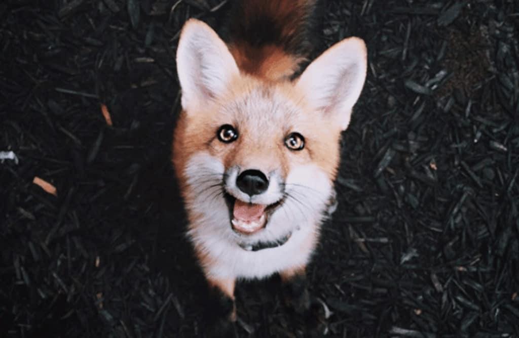 Top 8 des Instagrammeurs amis des animaux