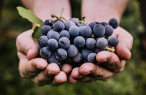 Le raisin : votre allié santé beauté