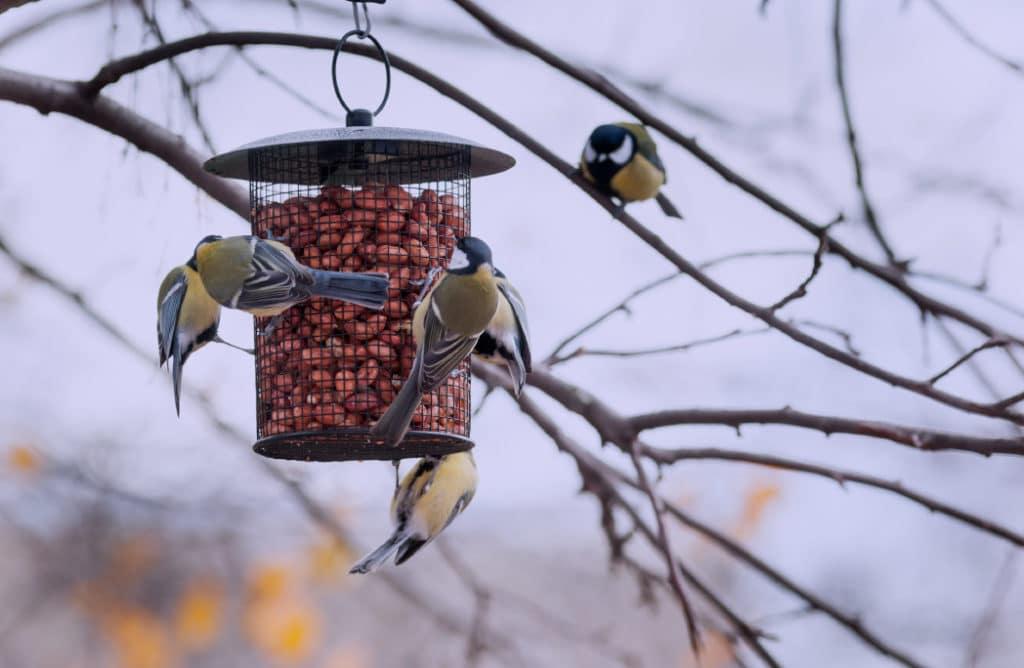8 beaux oiseaux à observer cet hiver dans son jardin