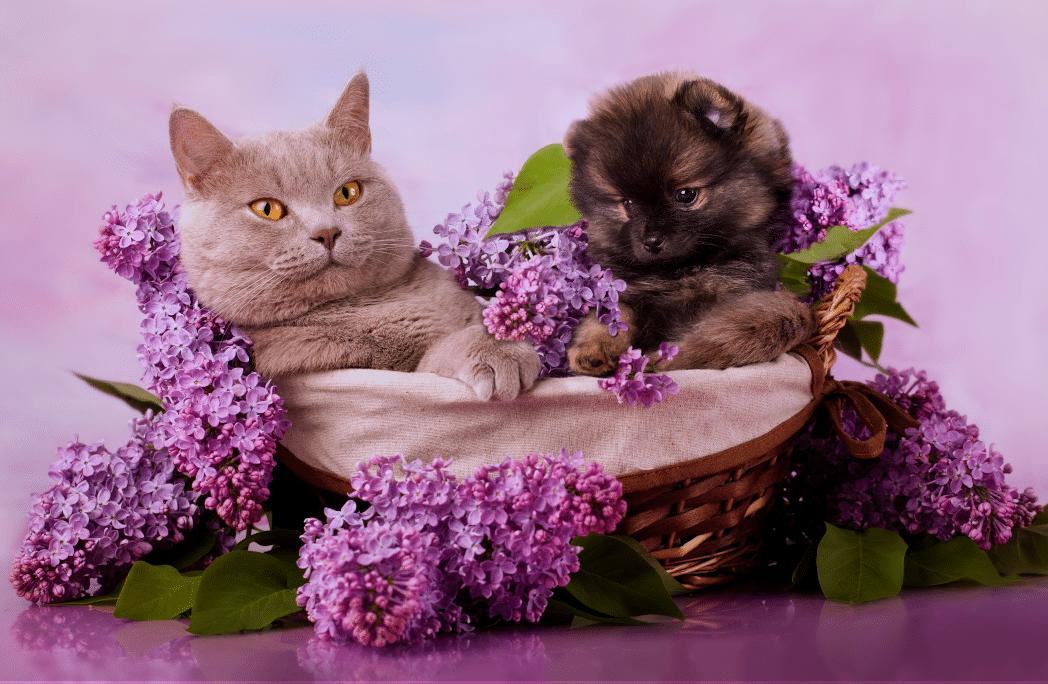 10 plantes toxiques pour chiens et chats conna tre absolument depuis mon hamac - Plante non toxique pour chat ...