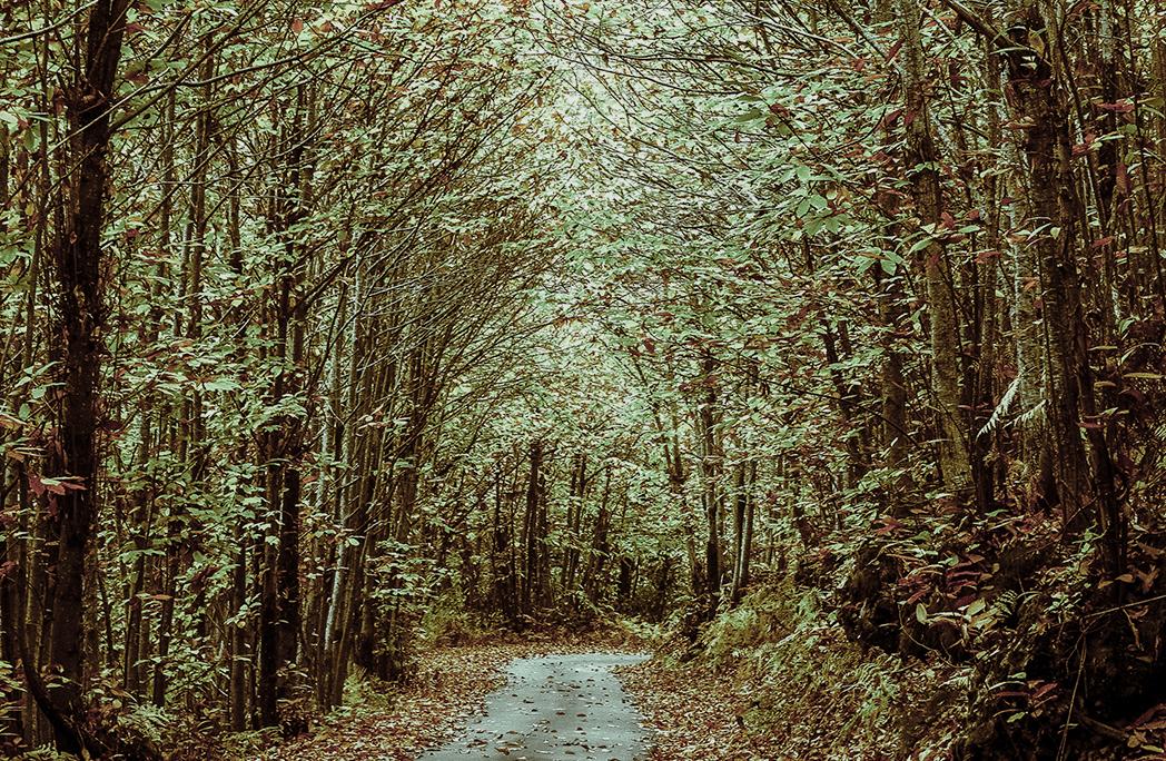 10 des plus belles forêts de France