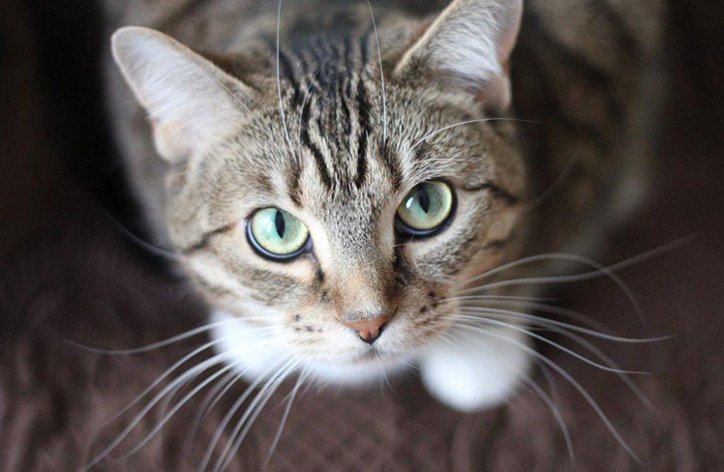 Êtes-vous l'esclave de votre chat ?