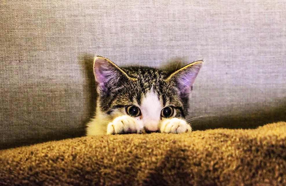 chat caché derrière canapé