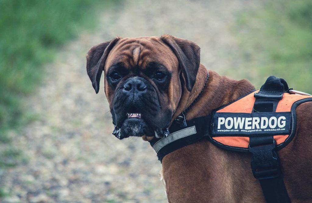 Top 10 des sports canins les plus tendances