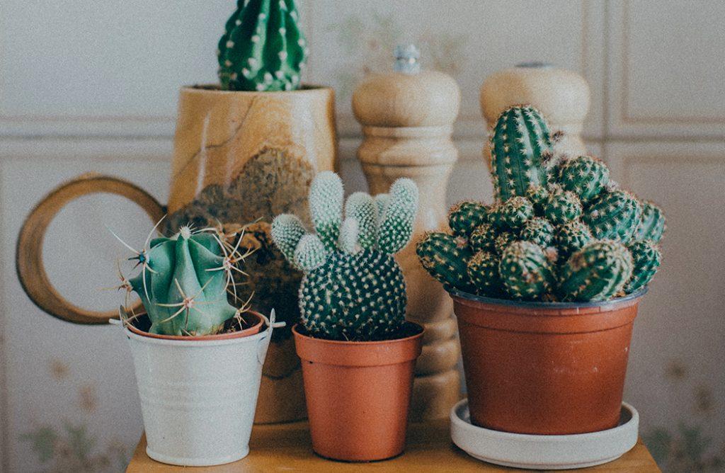 10 comptes Instagram à suivre pour voir la vie en vert