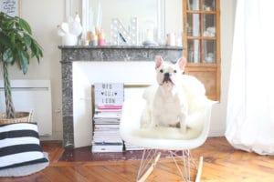 léon chien de dis oui ninon sur chaise