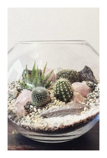 Cactus dans terrarium rond
