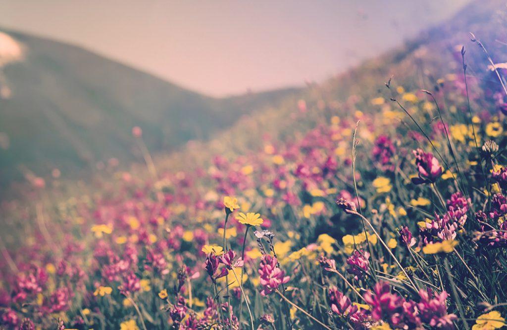 10 beaux paysages fleuris pour célébrer le retour du Printemps