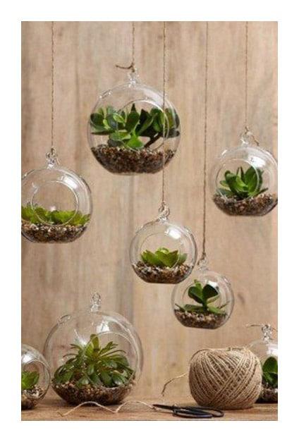Succulentes dans boules en verre suspendues