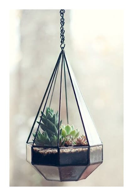 Succulentes dans suspension en verre design