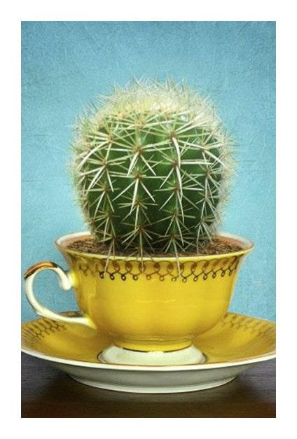 Cactus dans tasse