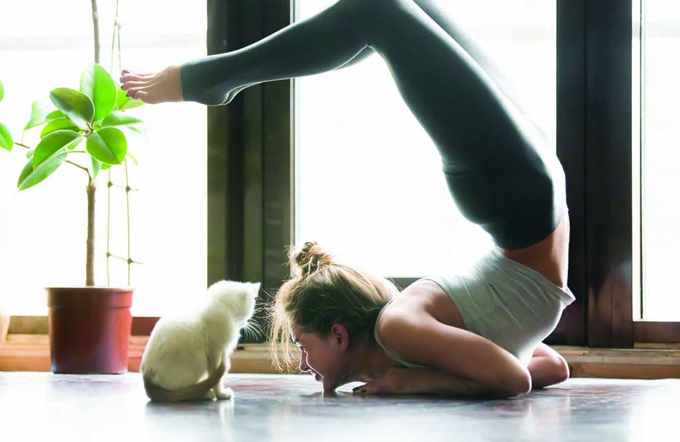 femme en posture de yoga avec un chaton