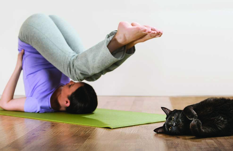 Femme faisant du yoga avec chat étendu à ses côtés