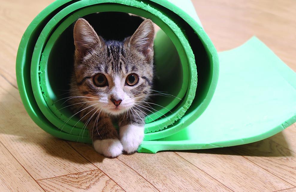 chat enroulé dans tapis de yoga