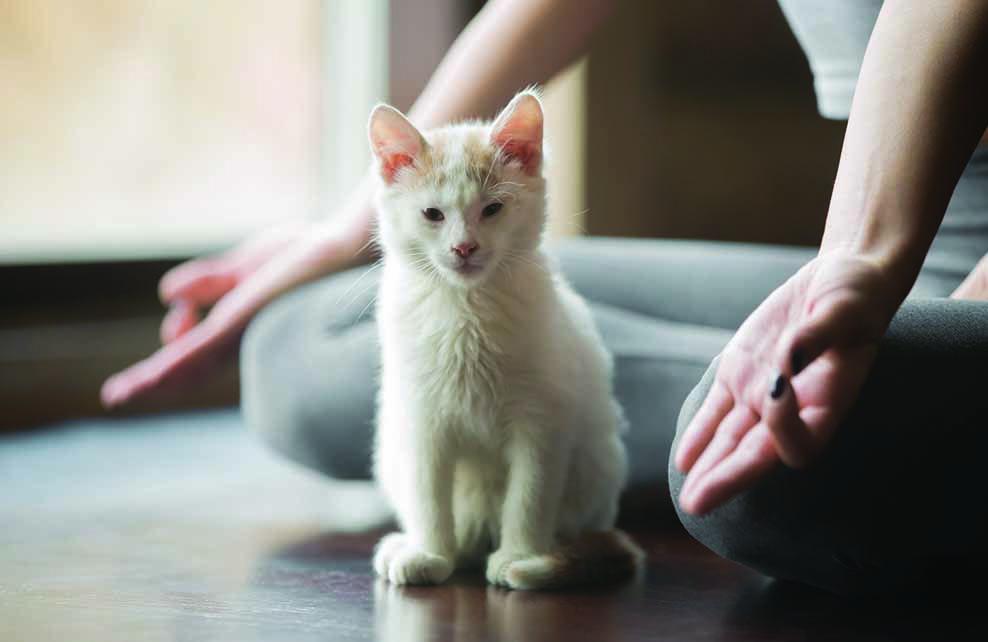 femme en position du lotus avec chaton