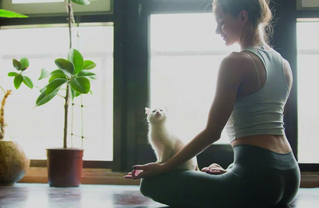 Connaissez-vous le Cat-Yoga ?
