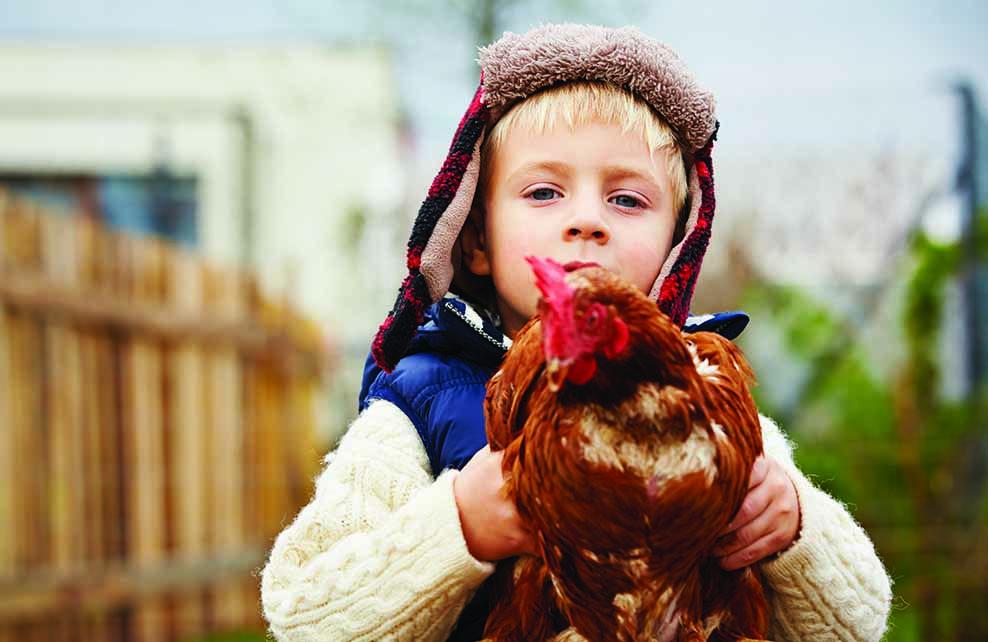 petit garcon tenant une poule