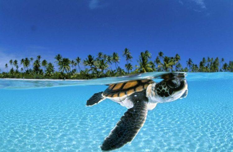 tortue dans eau turquoise