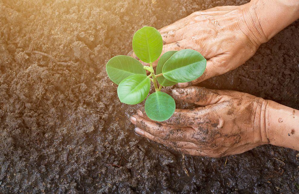 plantation d'un plante les mains dans la terre