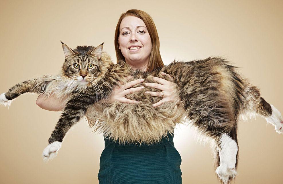 le plus gros chat du monde
