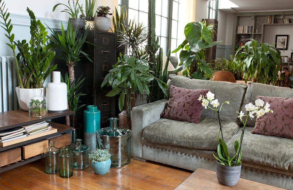 deco je mets mon salon au vert depuis mon hamac. Black Bedroom Furniture Sets. Home Design Ideas