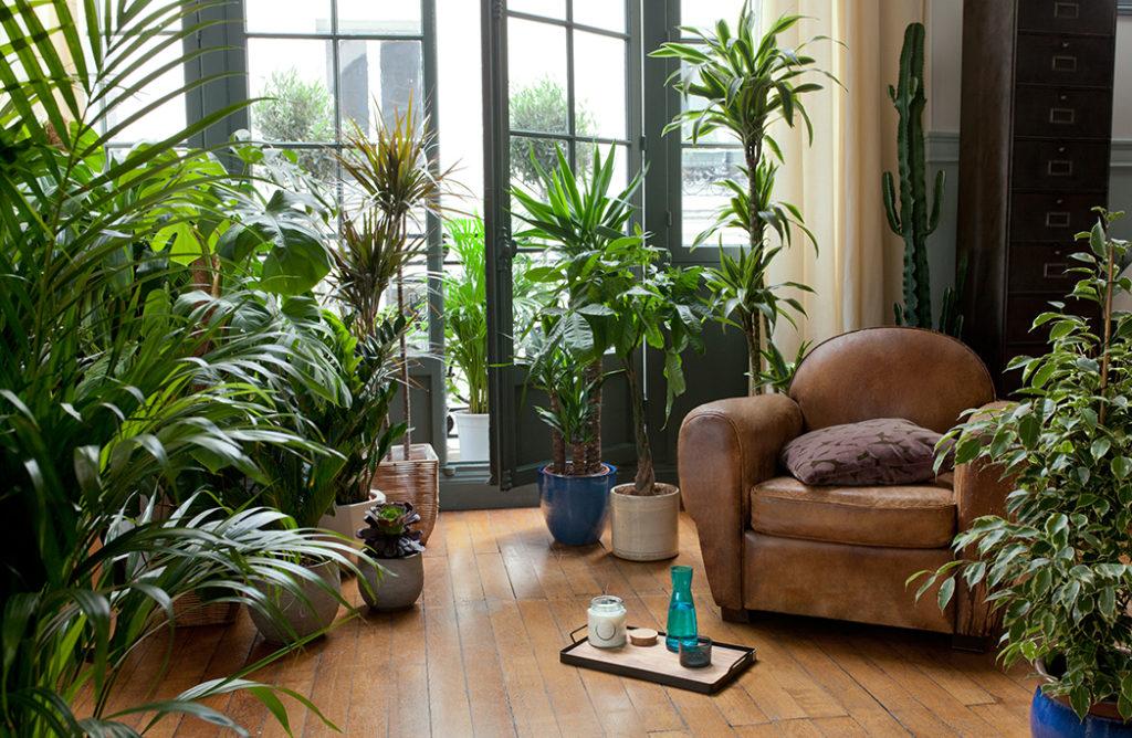 #DECO : Je mets mon salon au vert !