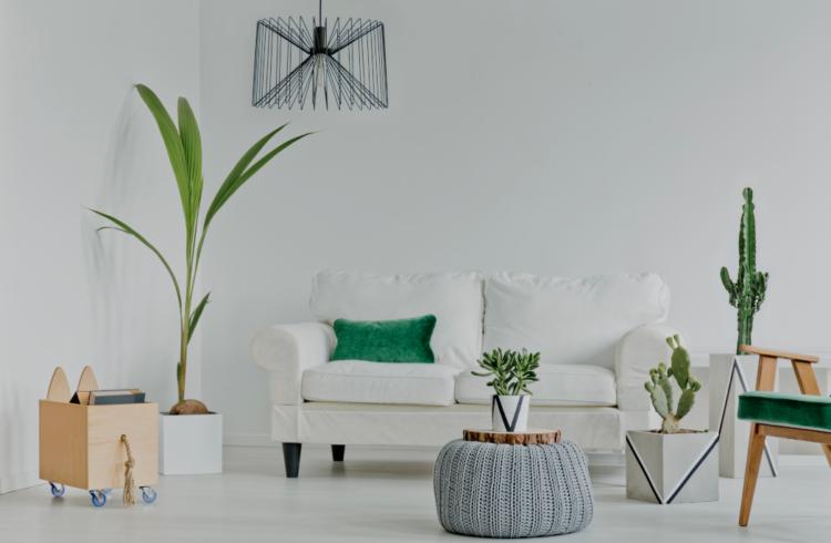 deco plante salon deco astuces pour agrandir son. Black Bedroom Furniture Sets. Home Design Ideas