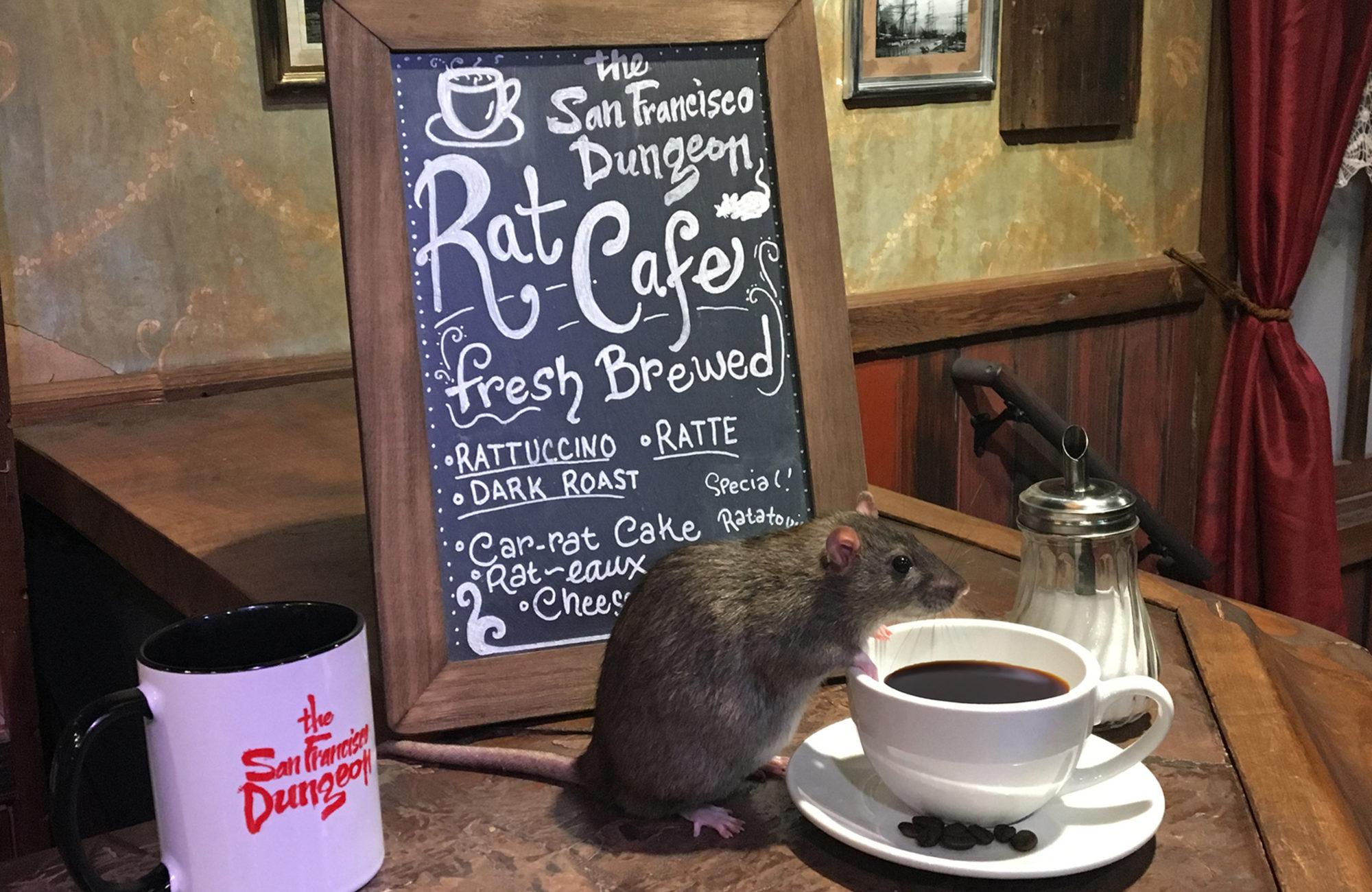 rat au dessus d'une tasse de café dans un bar