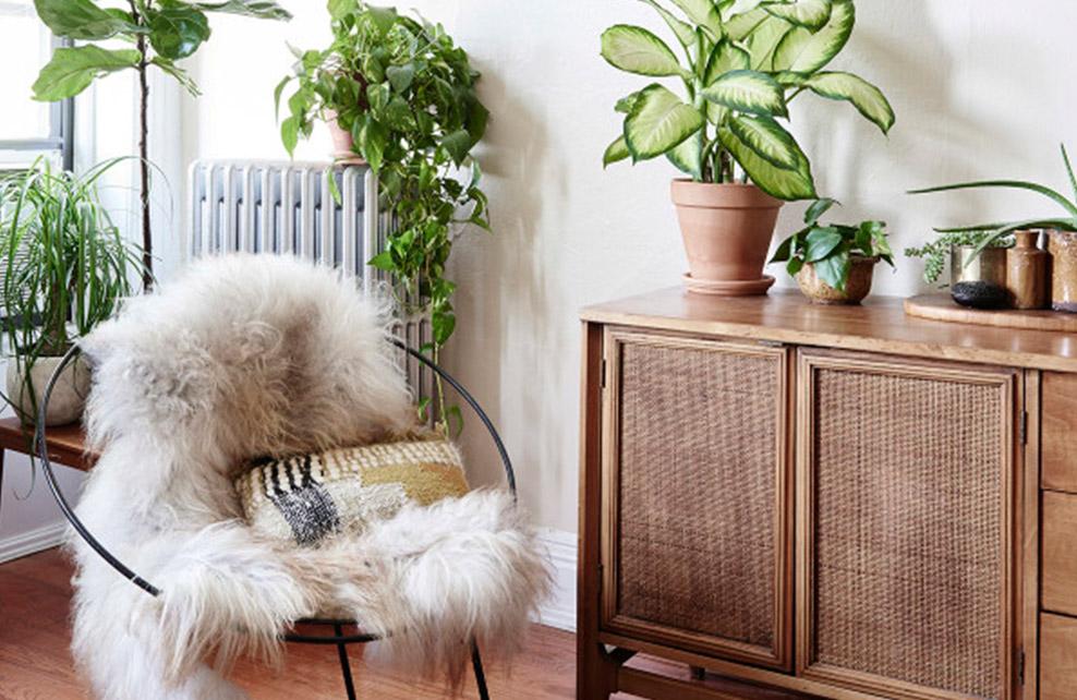 fauteuil avec couverture moumoute et plantes