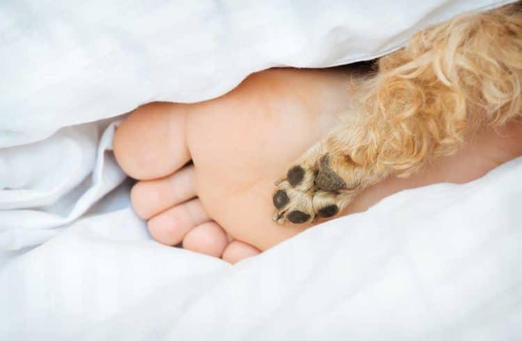 pied d'humain et patte de chien qui dépassent de la couette