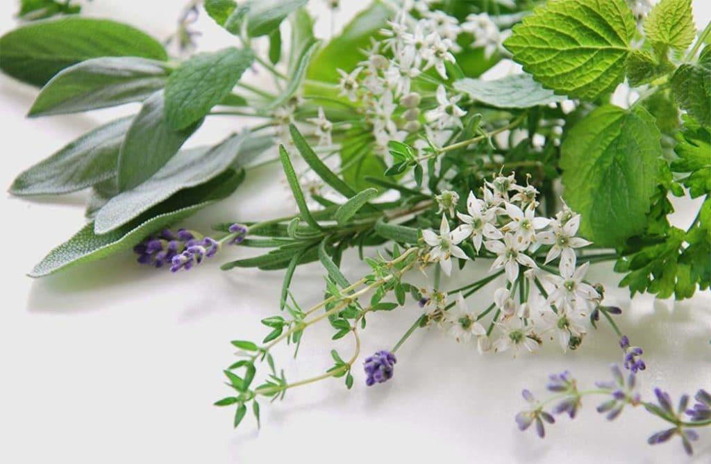 Herbes aromatiques : les 10 incontournables de l'été