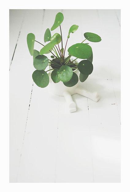 plante verte sur parquet blanc