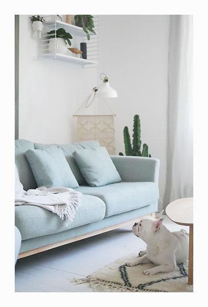 canapé et chien sur tapis avec cactus en fond du salon