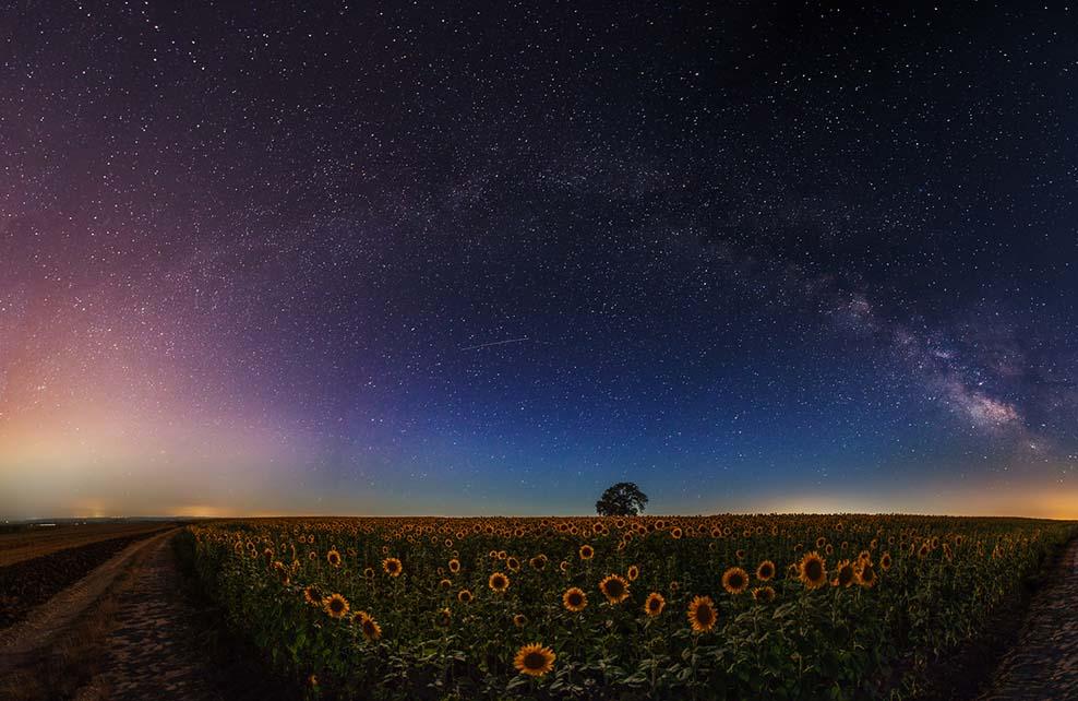paysage de tournesols au clair de lune