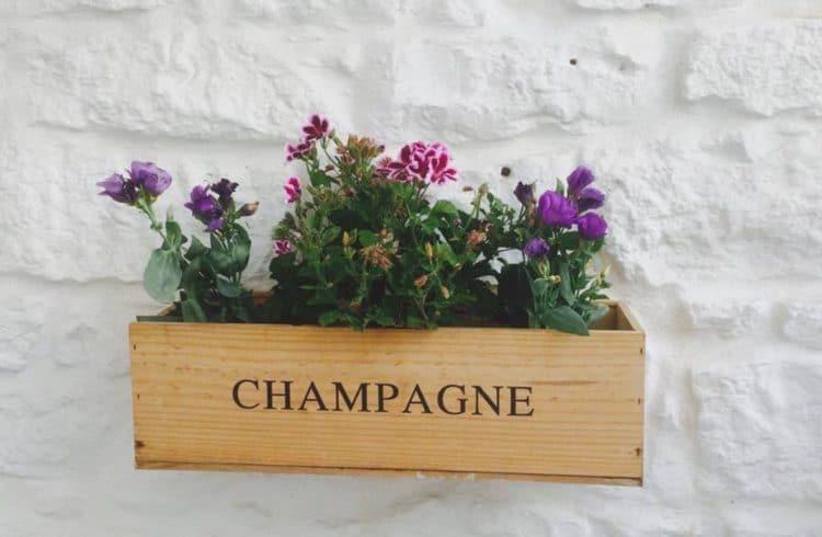 fleurs dans caisse à champagne en guise de jardinière accrochée au mur