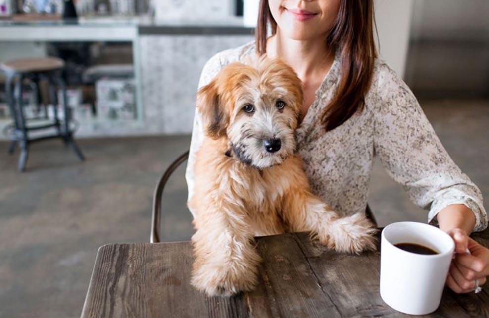femme attablée avec un café avec son chien sur les genoux