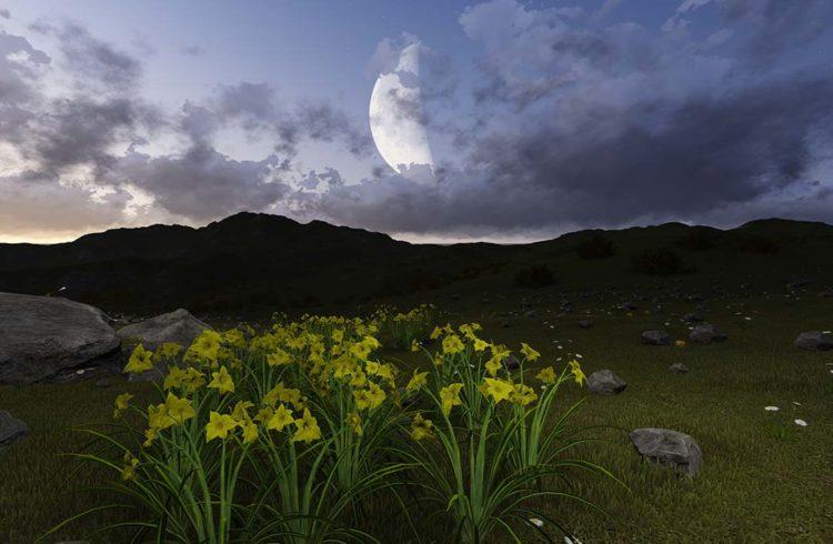 champ de jonquilles éclairé par la lune