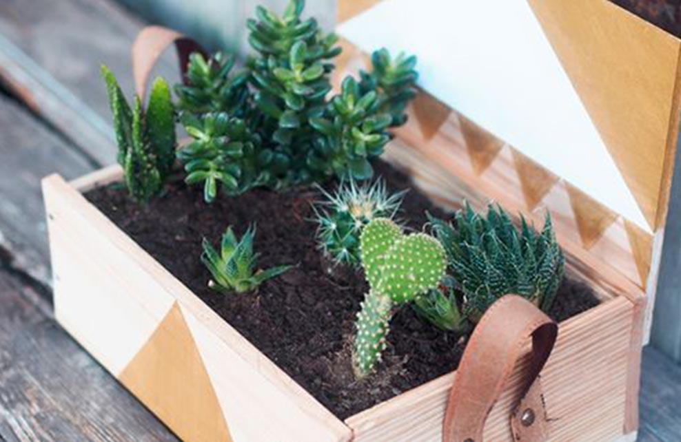 petites succulentes dans jardiniere fabrbiquée à partir d'une caisse de vin