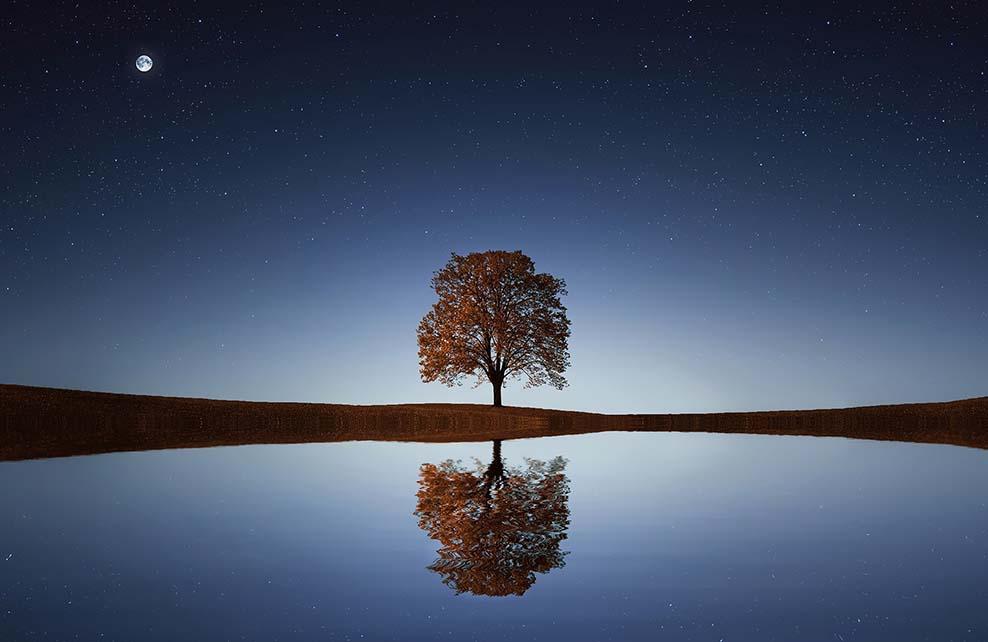 Paysage avec un arbre se reflètant dans l'eau au clair de lune