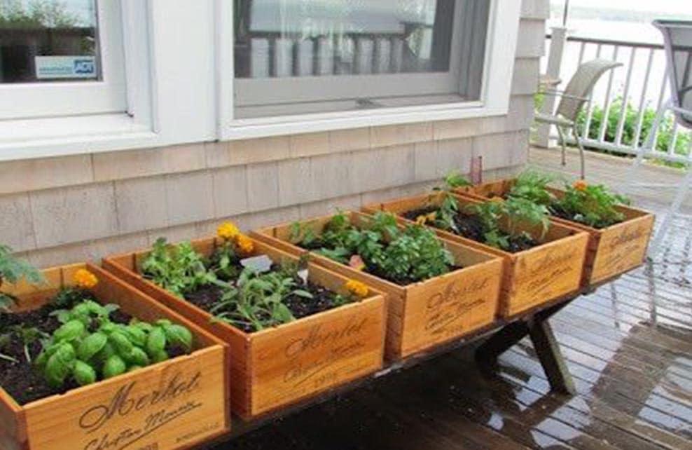 potager sur terrasse conçu à partir de caisses à vin