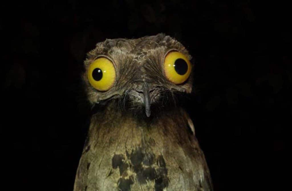 Les 10 photos d'animaux qui nous ont fait le plus rire cette année !