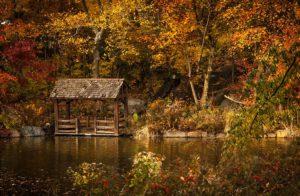 Central Park à New-York aux couleurs de l'automne
